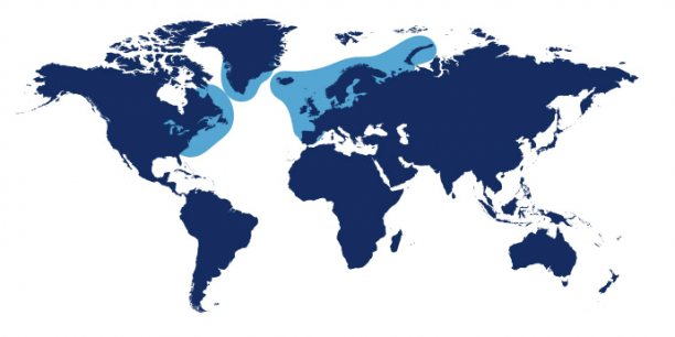 World map showing waters where Haddock is found.