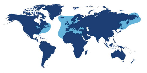 World map showing waters where Mackerel is found.