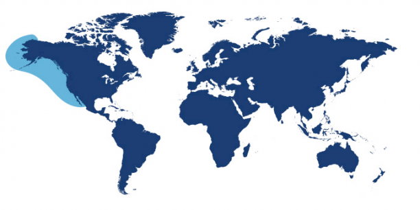 World map showing waters where Pacific Cod is found.